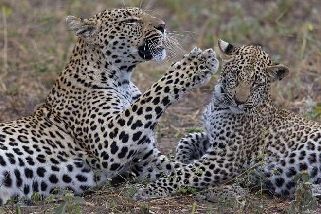 Greater Kruger National Park Discoverer