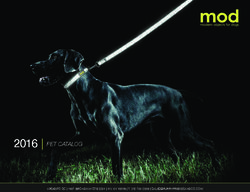 Mod. Modern Objects for Dogs. Pet Catalog 2016.