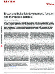 Brown and beige fat: development, function and therapeutic potential