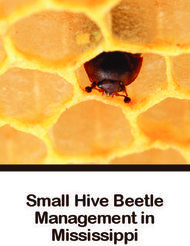 Small Hive Beetle Management in Mississippi